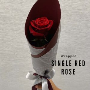 Valentine's Day - 1 single red rose wrapped